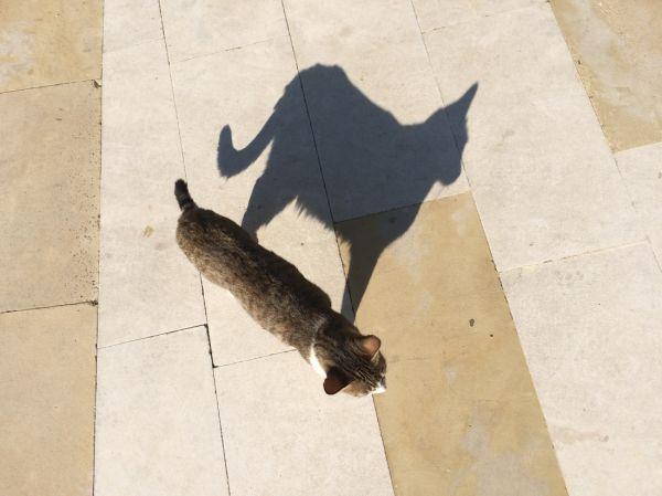 Kattskugga